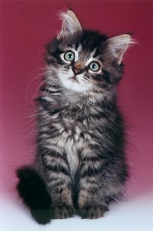 ...щенка, а чаще - котенка и сразу несет домой.